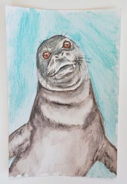 #26 Caribbean Monk Seal