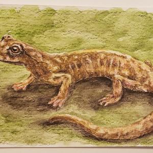 #52 Green-flecked Salamander