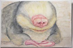 #149 De Winton's Golden Mole