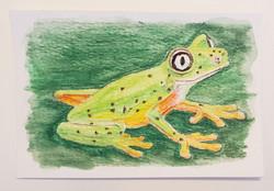 #20 Lemur Leaf Frog