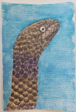 #114 Short-nosed Sea Snake