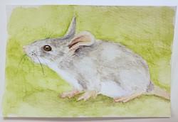 #65 Blue-grey Mouse