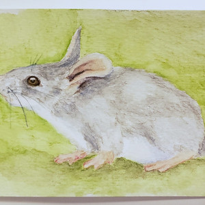 #65 Blue-grey mouse