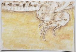 #213 Be'er Sheva Fringe-fingered Lizard