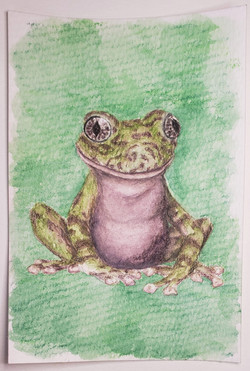 #126 Table Mountain Ghost Frog