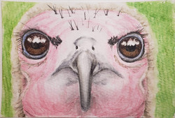 #221  Hooded Vulture