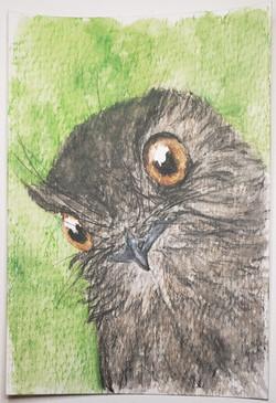 #129 New Caledonian Owlet-nightjar