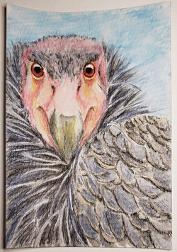#137 California Condor