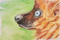 #16 Blue-eyed Black Lemur - Female