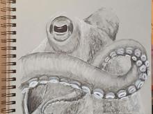 Intermission - Octopus