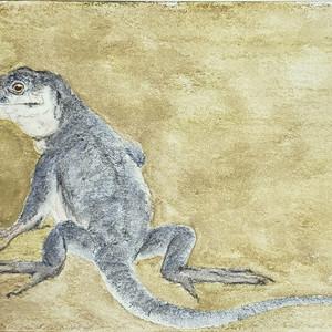 #286 La Gomera Giant Lizard