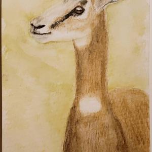#214 Dama Gazelle