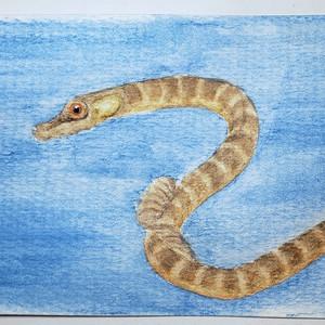 #147 Estuarine or River Pipefish