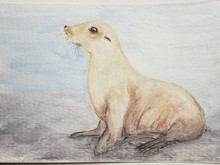 #204 Japanese Sea Lion