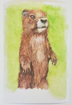 #25 Vancouver Island Marmot