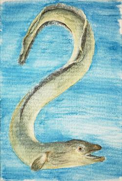 #289 European Eel