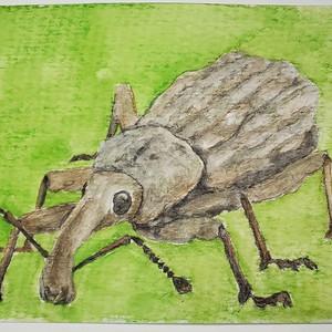 #174 Canterbury Nobbled Weevil