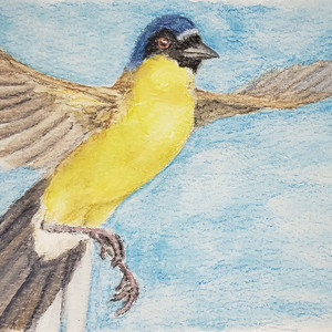 #356 Blue-crowned Laughingthrush