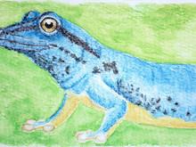 #322 William's Dwarf Gecko
