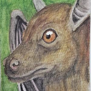 #259 Bulmer's Fruit Bat