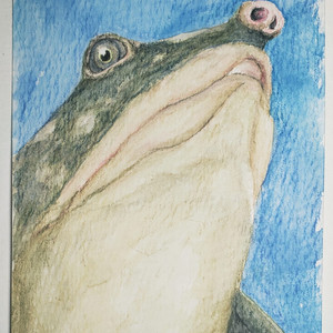 #133 Black Softshell Turtle