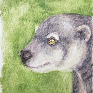 #351 Talaud Bear Cuscus