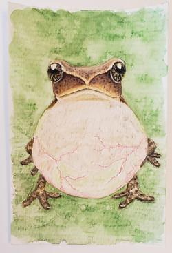 #50 Green-eyed Bushfrog