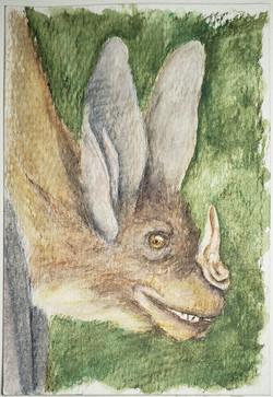 #127 Thongaree's Disc-nosed Bat