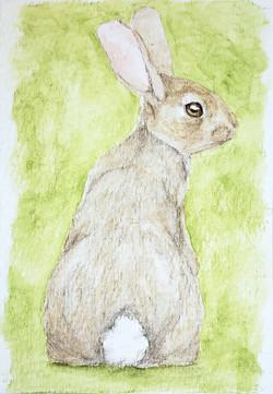 #316 San José Brush Rabbit