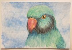 #108 Newton's Parakeet