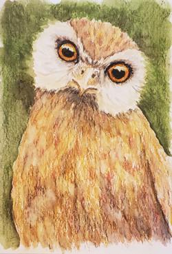 #27 Laughing Owl