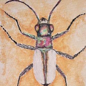 #274 Coral Pink Sand Dunes Tiger Beetle