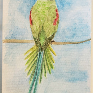 #107 Seychelles Parakeet