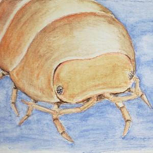 #333 Socorro Isopod