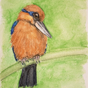 #363 Guam Kingfisher