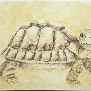 #215 Egyptian Tortoise
