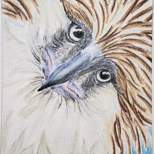 #242 Philippine Eagle