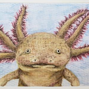 #89 Axolotl
