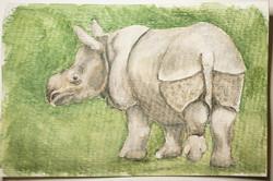 #150 Javan Rhinoceros