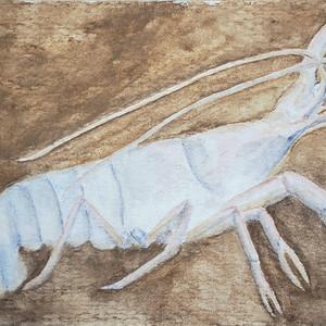 #276 Shelta Cave Crayfish