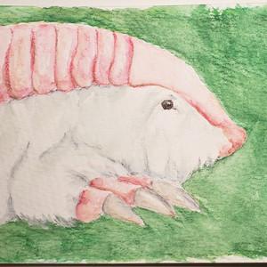 #159 Pink Fairy Armadillo