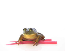 Frogsticks