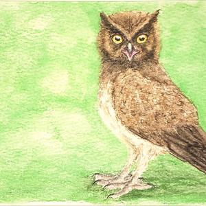 #350 Siau Scops Owl