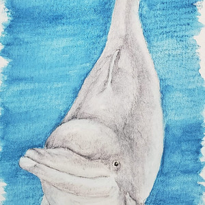 #366 Atlantic Humpback Dolphin