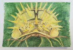 #69 Spiky Yellow Woodlouse