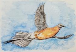 #32 Passenger Pigeon