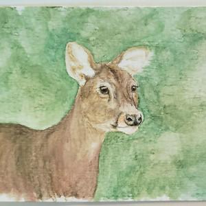 #103 Bawean Deer