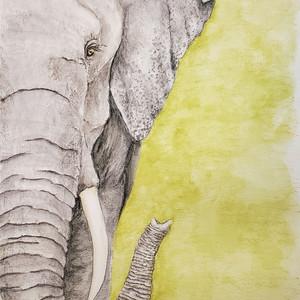#183 Sumatran Elephant