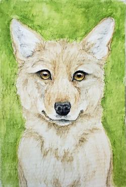 #249 Japanese or Honshu Wolf