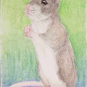 #218 Ethiopian Amphibious Rat